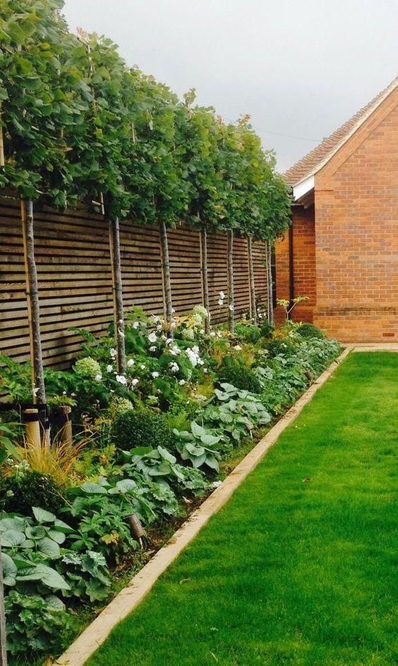 Backyard Trees Ideas: Stylish Fence Landscaping