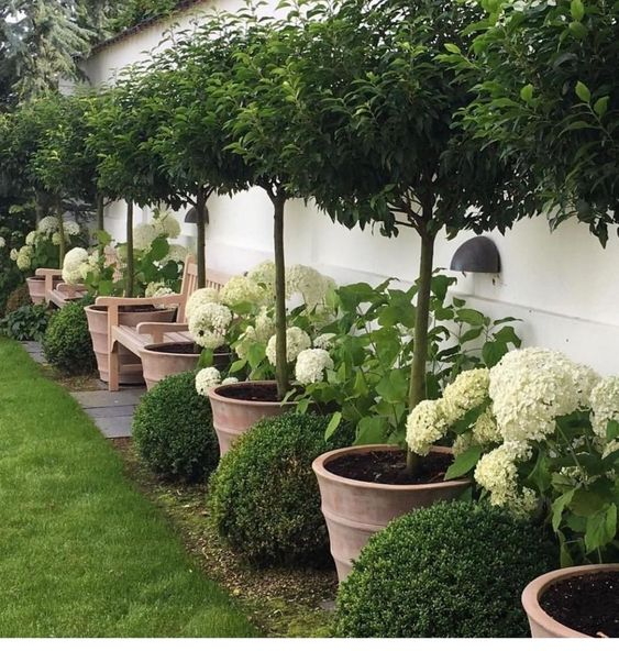 Backyard Trees Ideas: Chic Potted Trees
