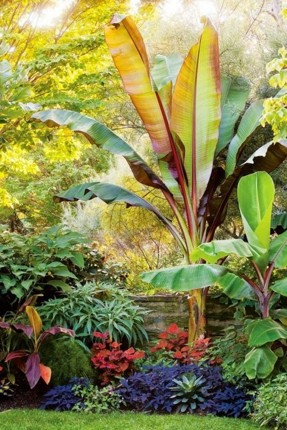 Backyard Trees Ideas: Catchy Tropical Landscaping