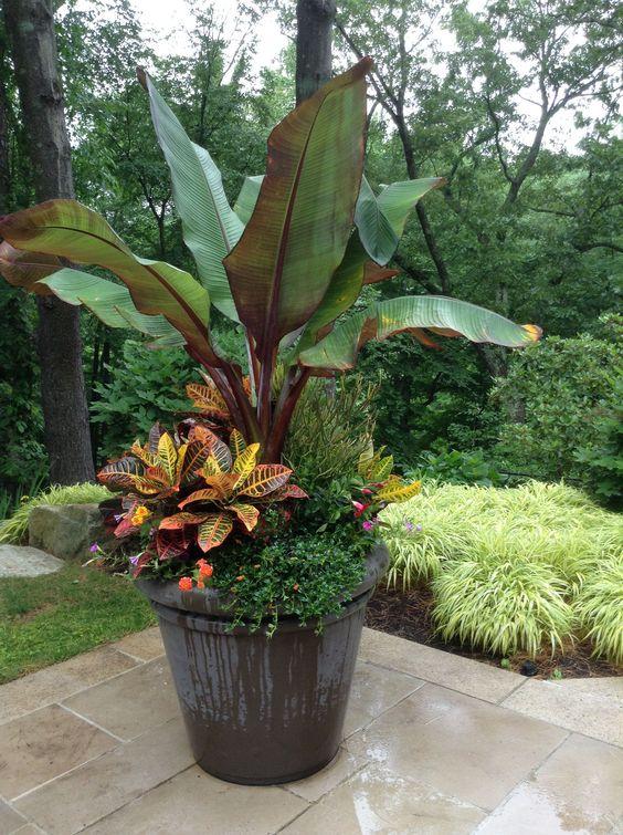tropical backyard ideas 11