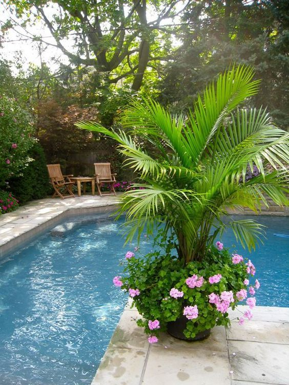 tropical backyard ideas 13