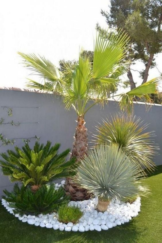 Tropical Backyard Ideas: Simple Chic Landscaping