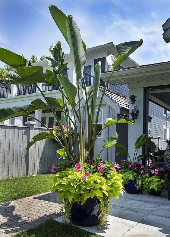 Tropical Backyard Ideas: Simple Cathy Decor